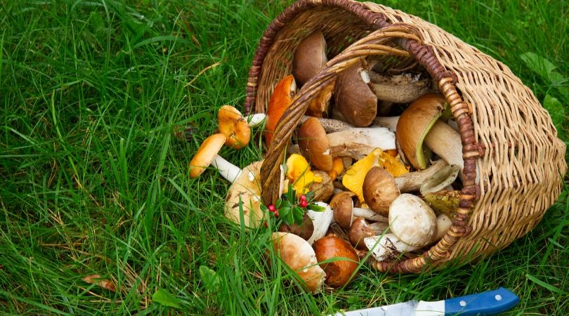 grow new food mushrooms